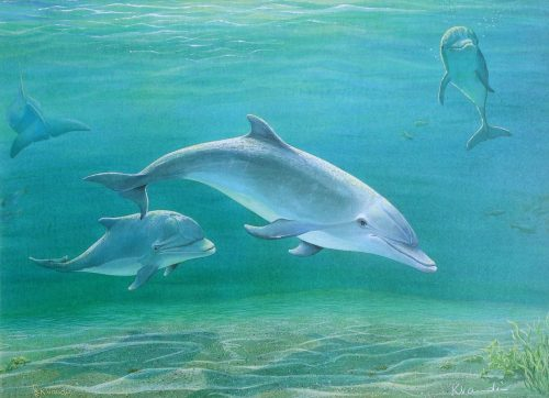 Dolphins Old Friends - Underwater Painting