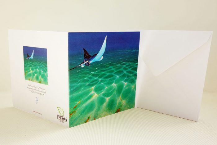 Sea Life Card