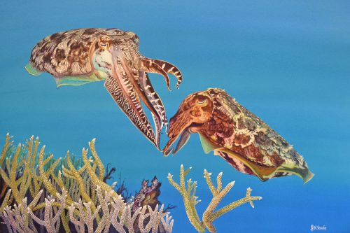 A painting of cuttlefish by Deep Impression.