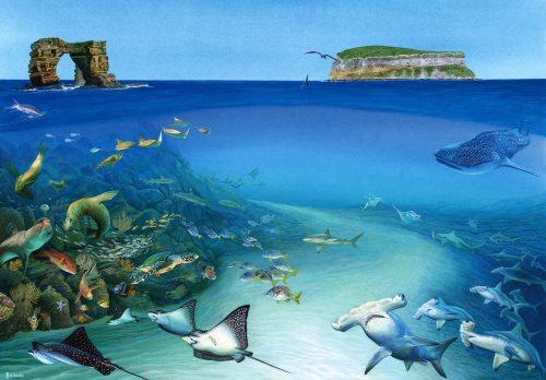 Galapagos fine art print.