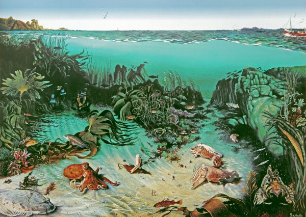 Cuttlefish gully fine art print