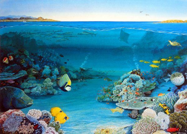 Coral garden fine art print