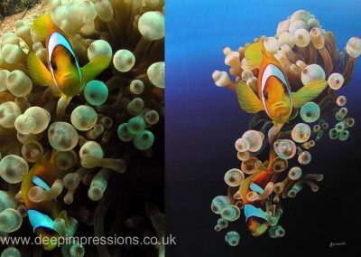 Clownfish photo / painting