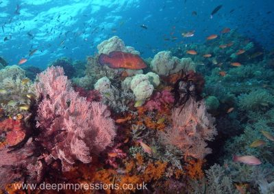 Raja Reef