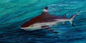 Black tip shark painting