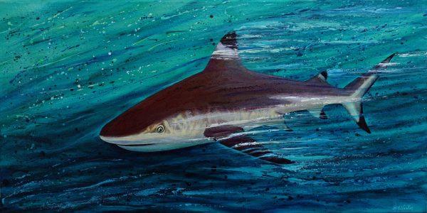Black tip shark painting